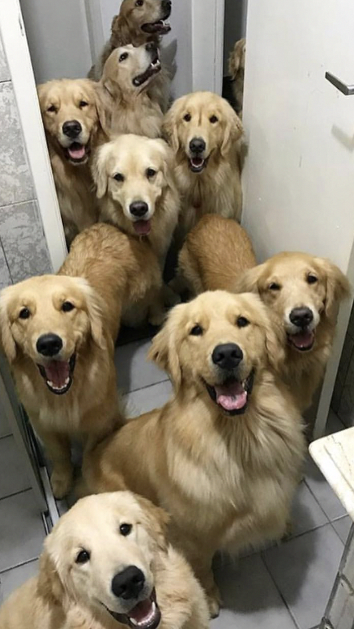 This Is What Happens When You Fall In Love With Your Dogs Entire Litter Of Puppies Goldenretrievers Dogs Golden Retriever Dog Love