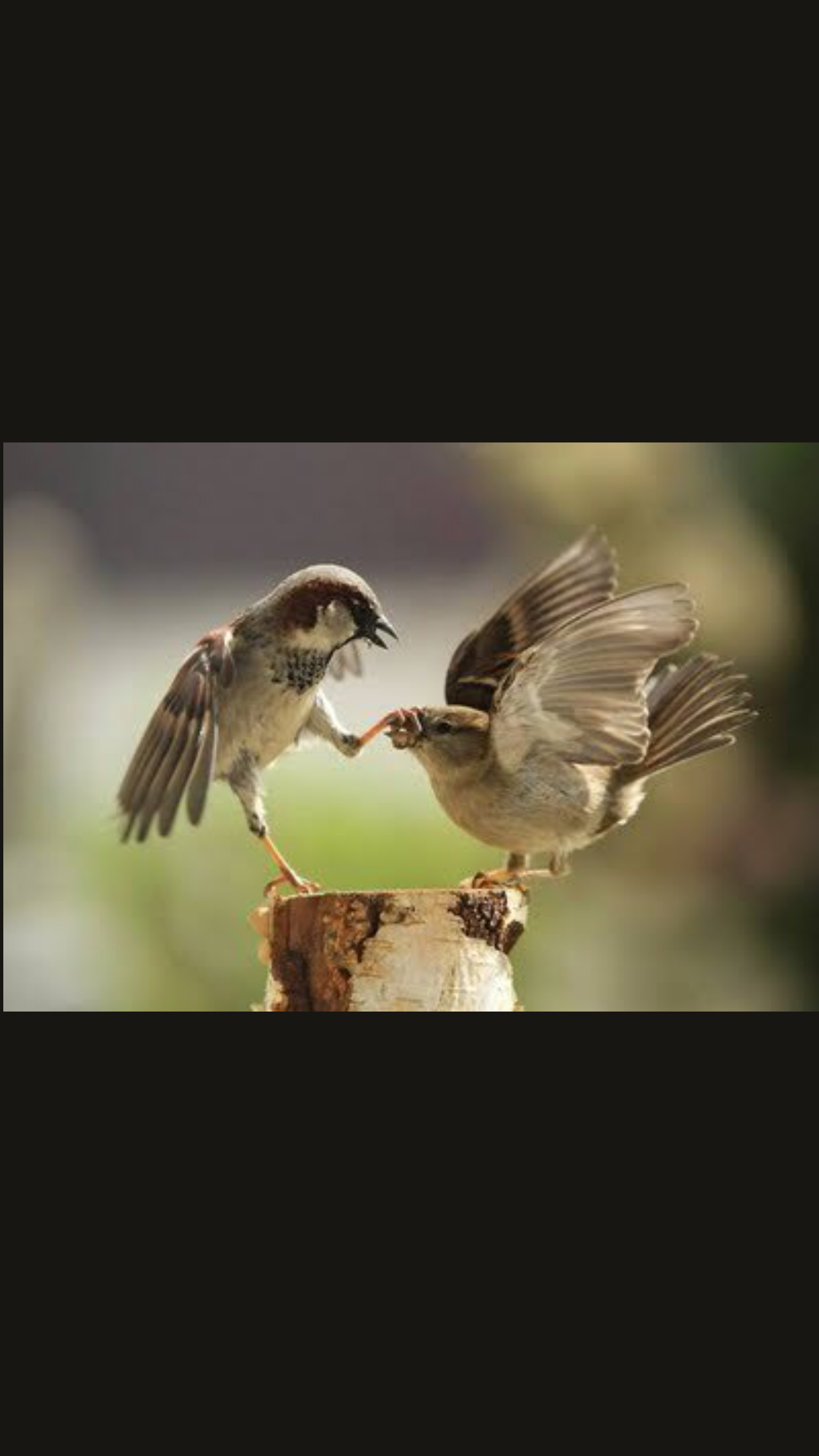 """And he is saying """"I said shut up..when a male can't stand it anymore LOL"""