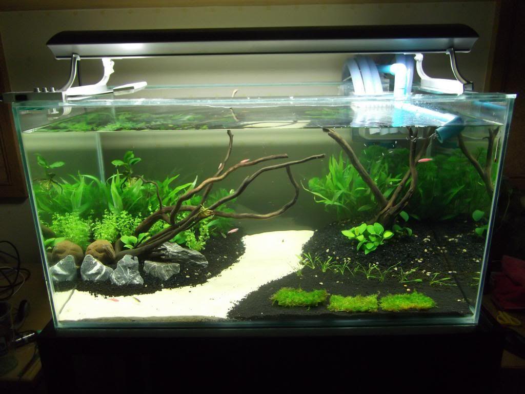 Pin by klaudia győrfi on aquarium és halak pinterest aquariums