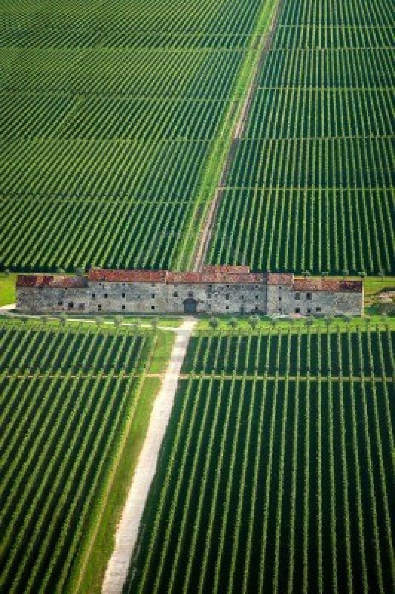 Fields Of Vines Amp An Old County House In Veneto Italy