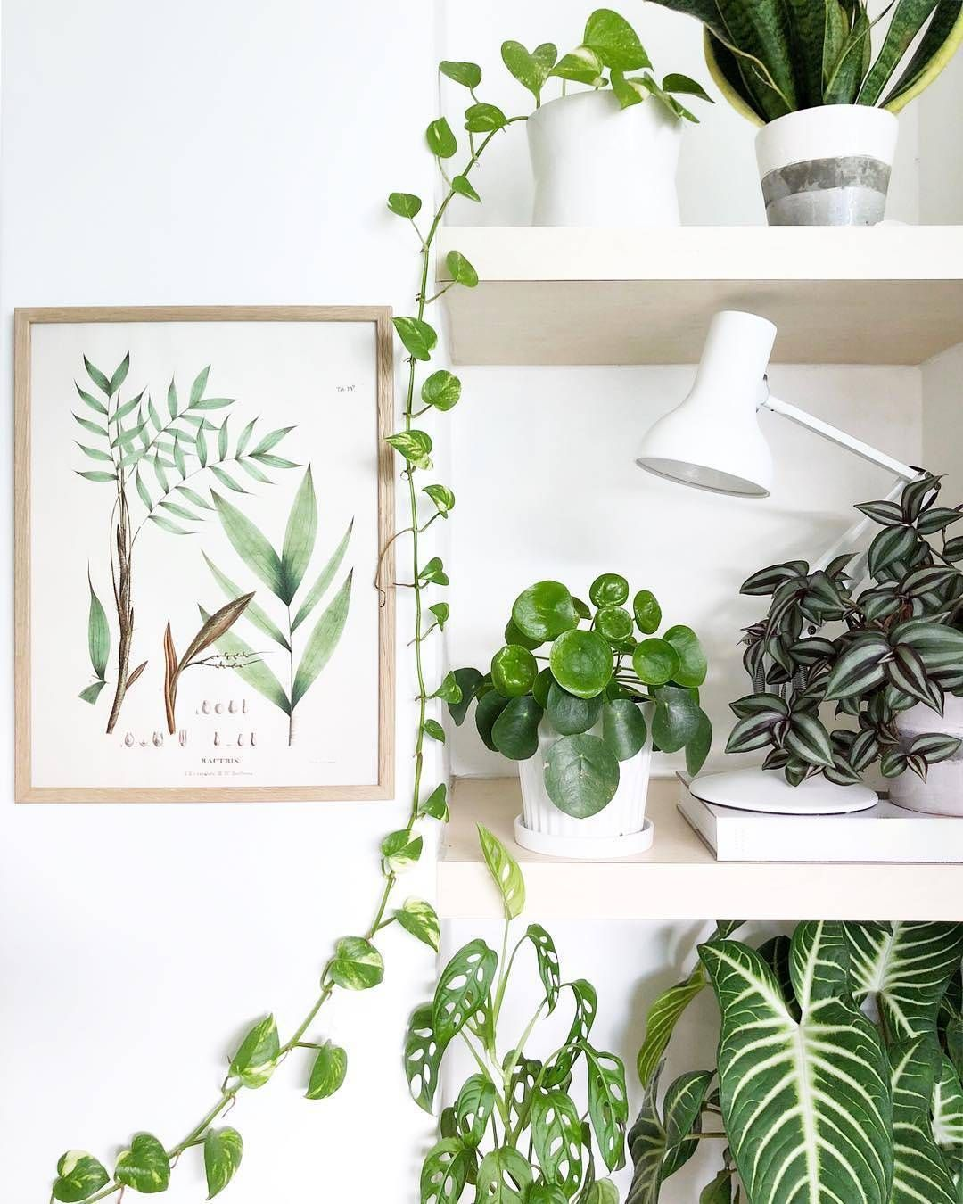 Plant shelfie indoor plants pinterest