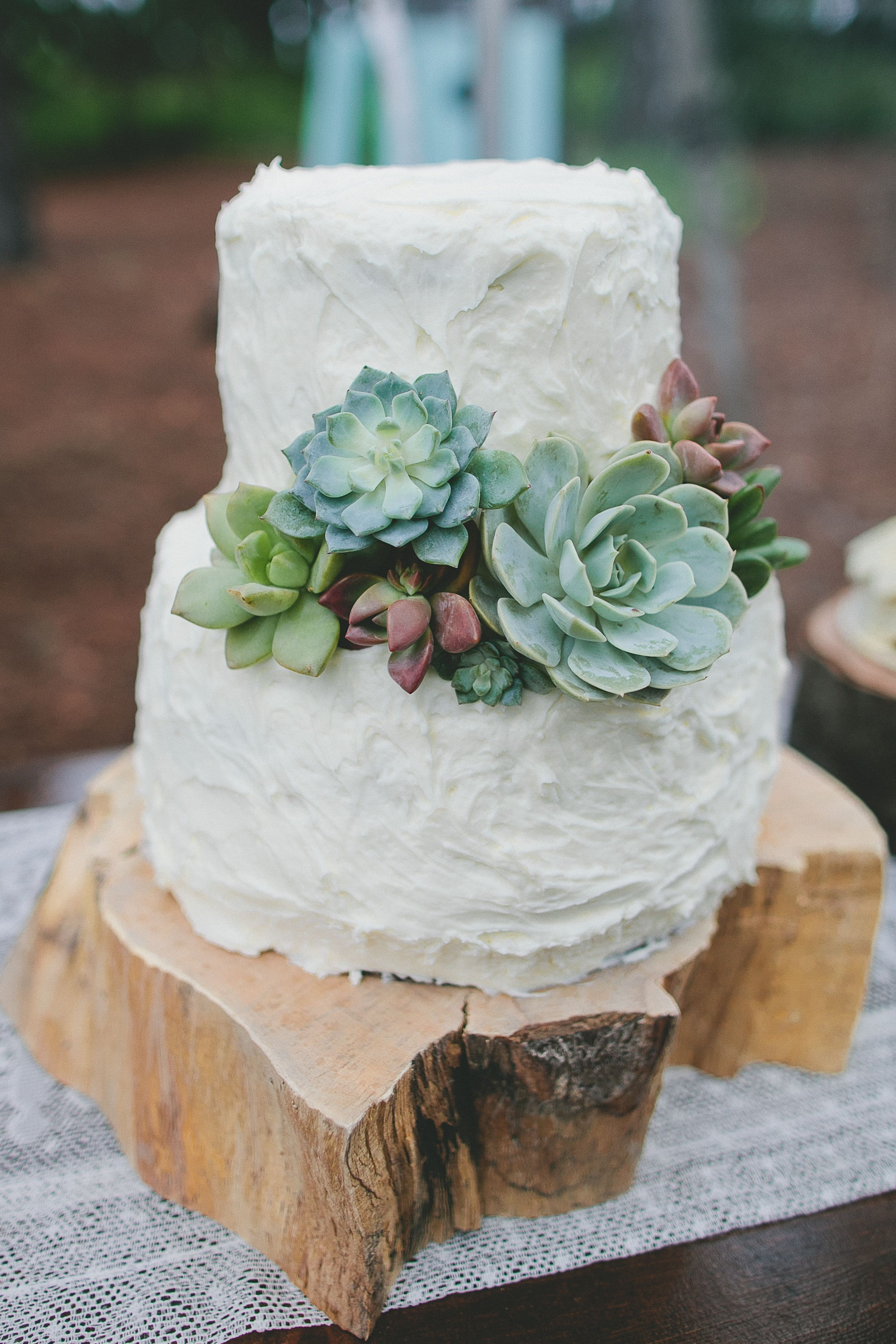 Succulent wedding cake idea   two tier  buttercream frosted wedding     Succulent wedding cake idea   two tier  buttercream frosted wedding cake  with succulents on wood slice  Photo by  andrewjadephoto