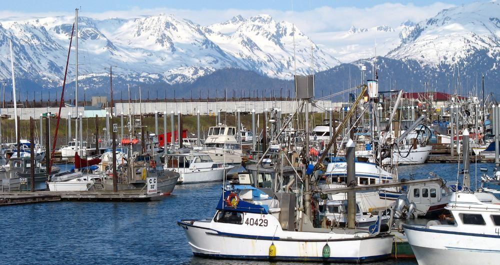 25 best things to do in homer alaska alaska travel