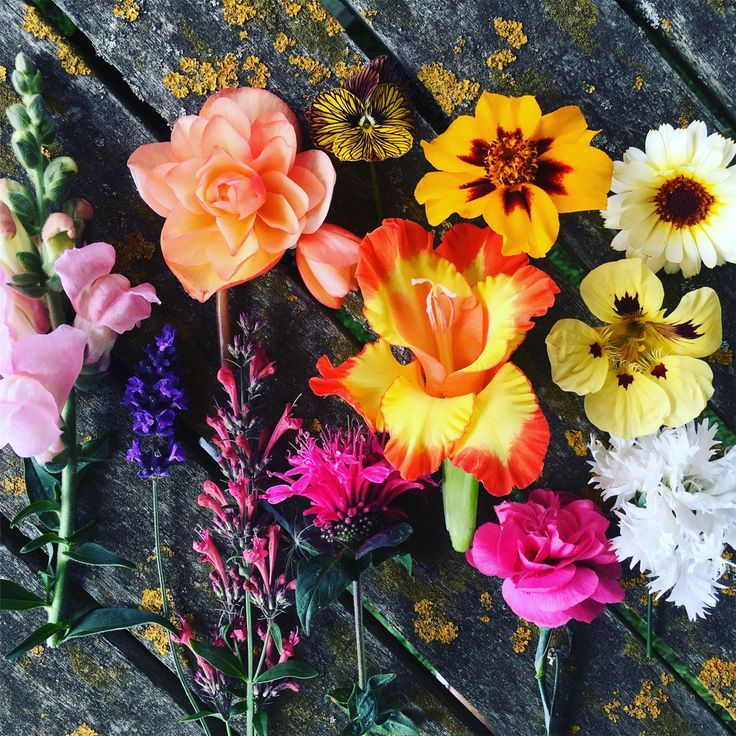 5 Unusual Edible Flowers For You To Try Edible Flowers Edible Flowers Recipes Flowers
