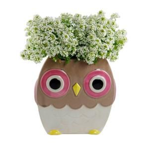 Norcal Pottery 6 In Ceramic Brown Whimsical Owl 100512992 At The Home Depot Mobile Whimsical Owl Ceramic Plant Pots Ceramic Planter Pots