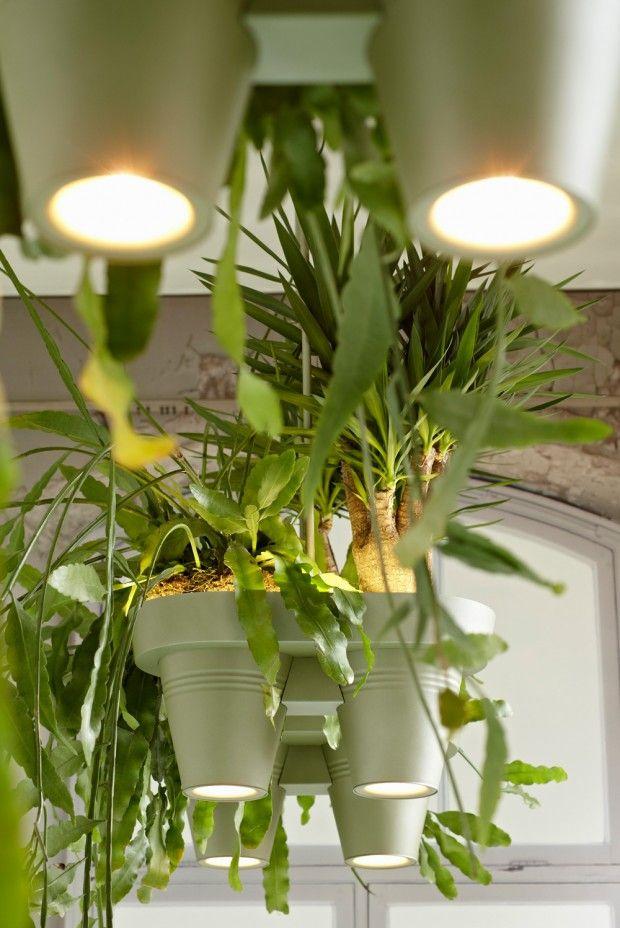 Beleuchtung Für Pflanzen   Lampengehause Roderick Vos Pflanzen Beleuchtung Beleuchtung