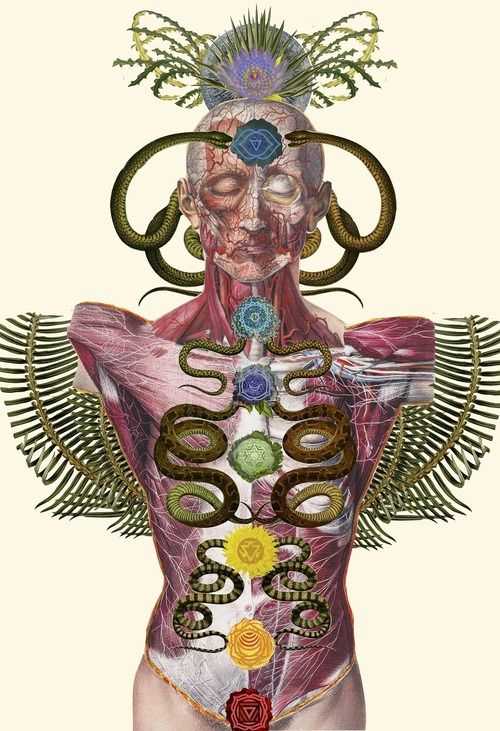 Travis Bedel (aka Belgedeuse). Anatomical Collage Tumblr | Body ...