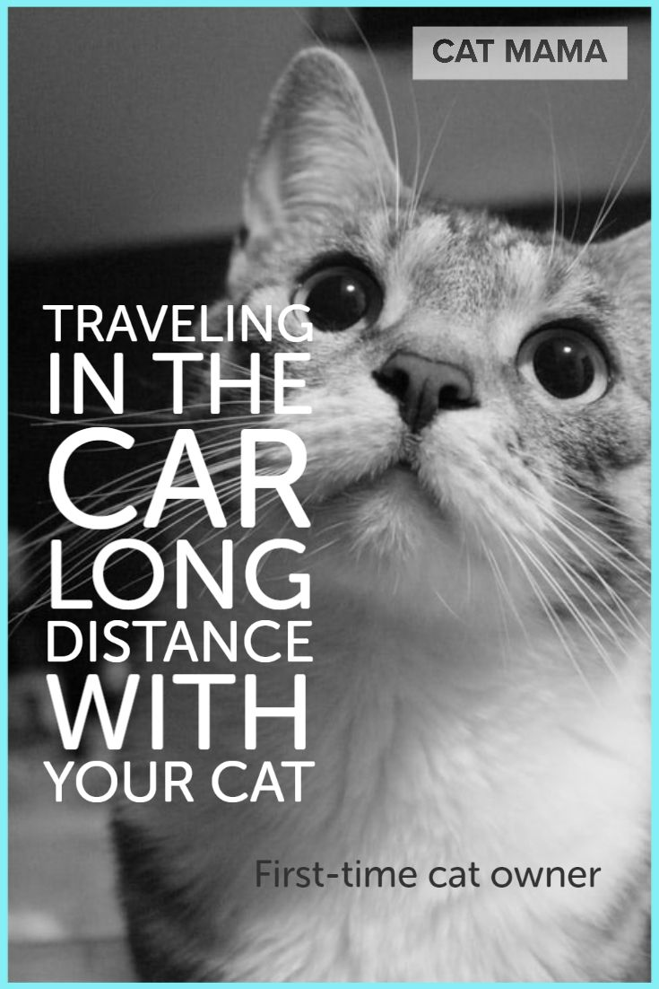Traveling with Cats in Car Long Distance in 2020 Cat