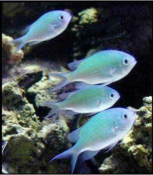Pin By Angela Emery On 1fish2fishredfishbluefish Saltwater Fish Tanks Aquarium Fish Reef Aquarium