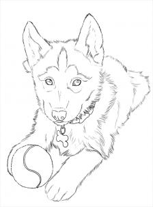 How To Draw Huskies Draw A Husky Step 24 Animal