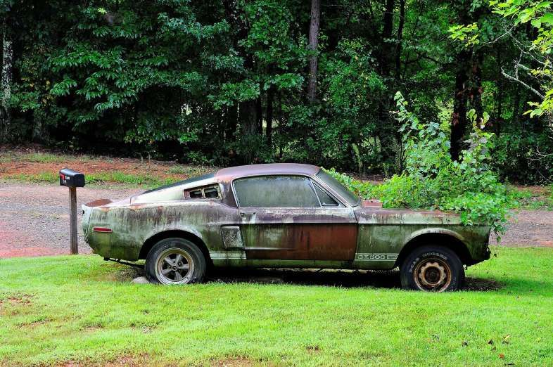 Wow 1967 Shelby Gt500 Left For Dead Abandoned Cars