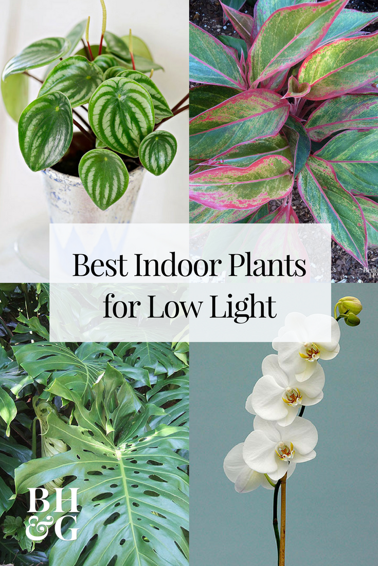 23 Of Our Favorite Low Light Houseplants Easy Care