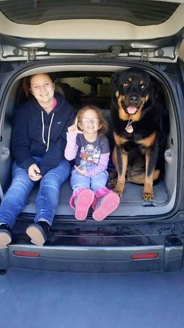 ROTTWEILERS AND FRIENDS  BIRTHDAY POSTHandsome Zeus is 7 today .jpg (360×640)