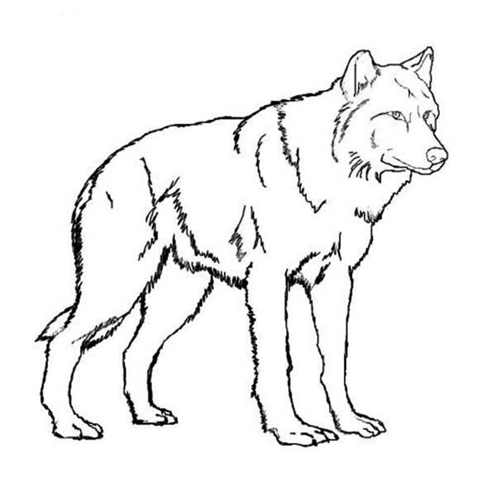 Colouring pages wolf - Realistic Wolf Coloring Pages
