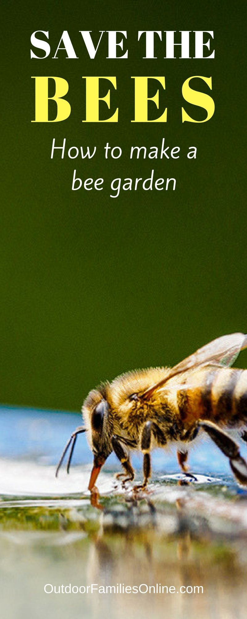 Creating a pollinator garden give bees a helping hand