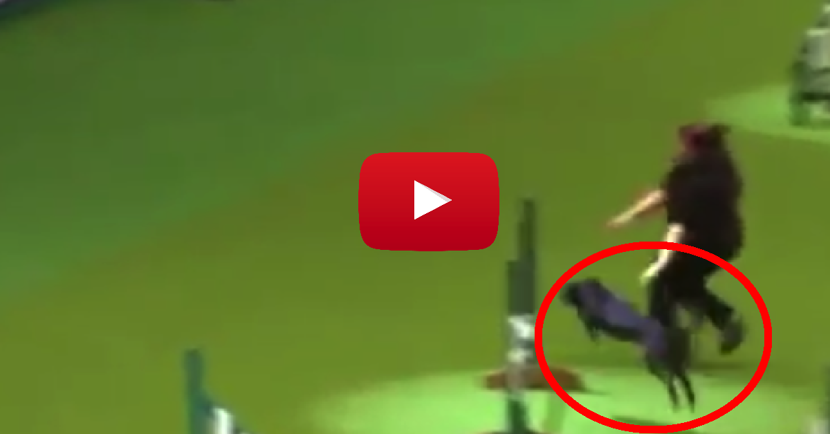 I Can't Believe What This Dog Did In The Middle Of A Competition On LIVE TV! via LittleThings.com