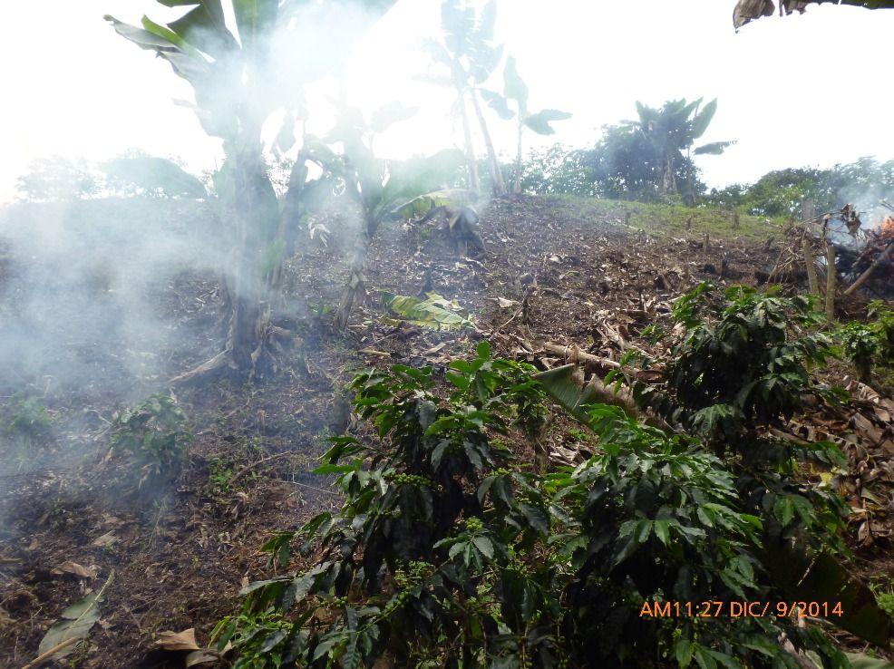 Finca Santa Marta - Rostro en el humo