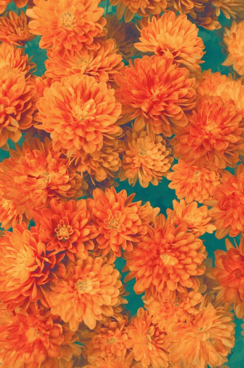 Hipster Vintage Design Orange Flowers Nature Pattern Fl Dreamy Artist On Tumblr Original Photography Pyschedelic