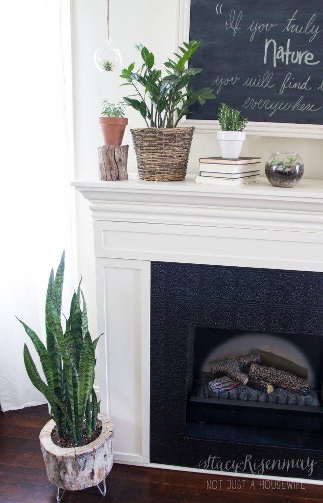 Mantel decor plants
