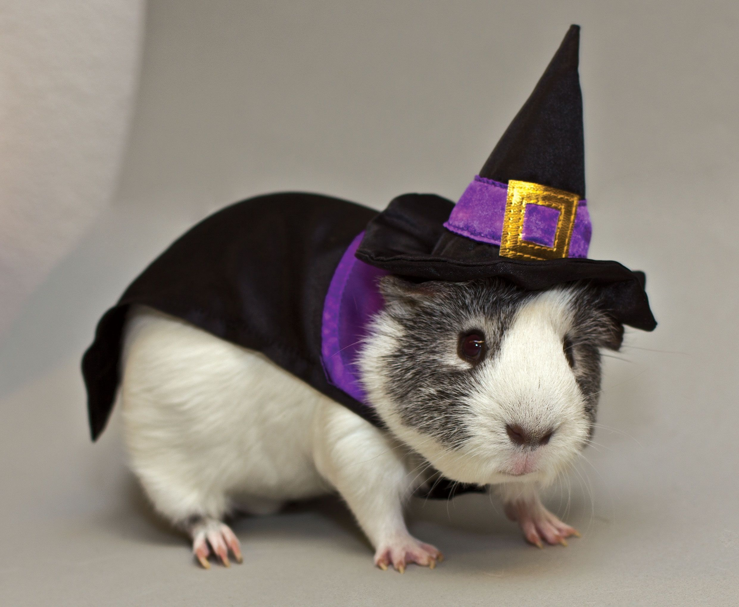 Calling All Fuzzy and Scary-Cute Pets to PetSmart this Halloween ...