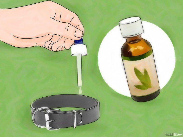 Get rid of fleas naturally essential oils for fleas