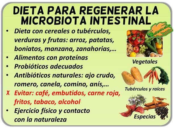 dieta mejorar para la microbiota flora intestinal, disbiosis