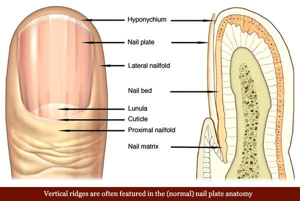 Best 25+ Ridges on nails ideas on Pinterest | B12 ... B12 Deficiency Nails