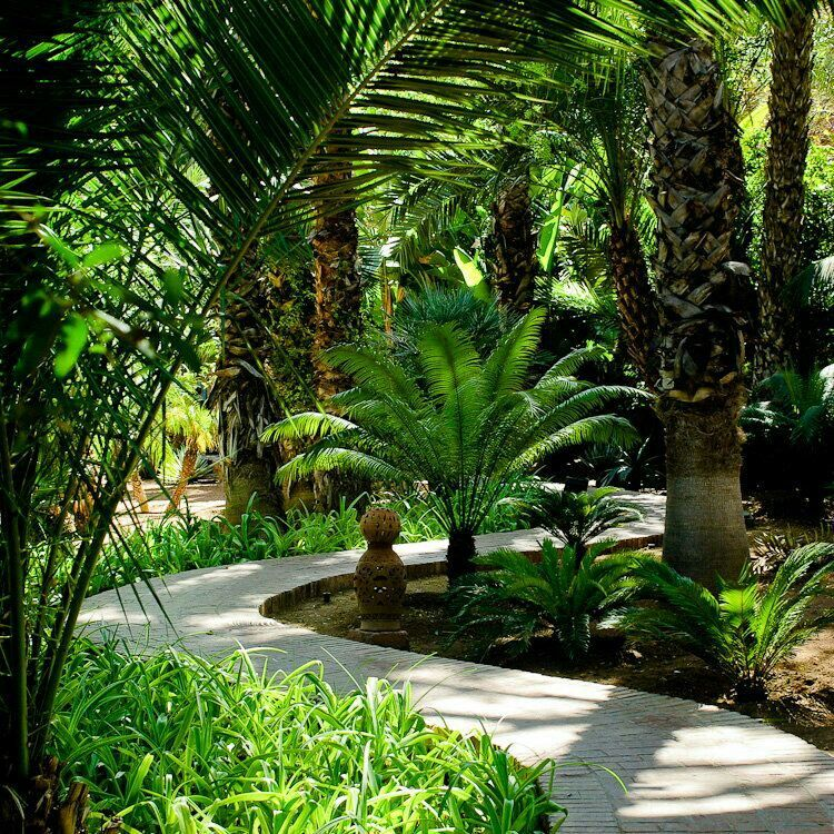Majorelle | Garden | Pinterest | Outdoor ideas, Tropical garden and ...