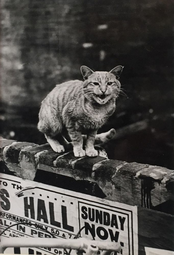 Cats of London 1951 Thurston Hopkins Hyman Collection