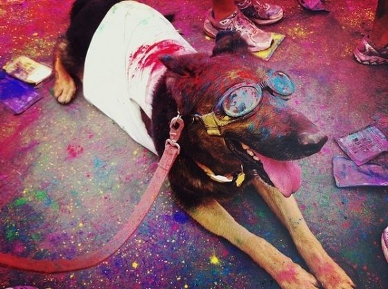 53 Rainbow Tastic Pictures Of The Color Run 5k Dog Milk Dog