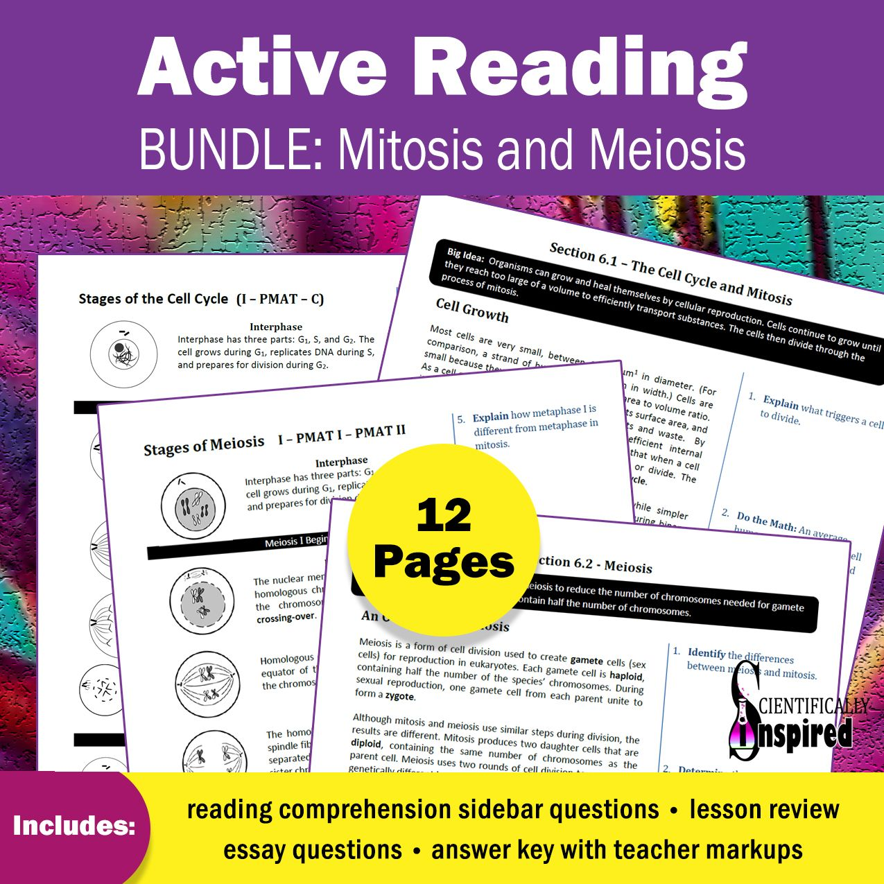 Active Reading Bundle Dna Transcription Amp Translation