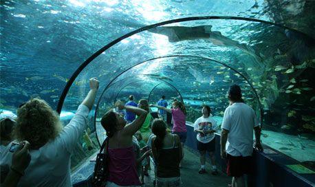 Litchfield Inn Ripleys Aquarium Package Pawleys Island Hotels