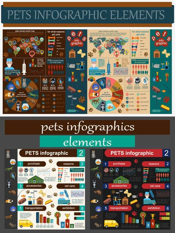 Pets and veterinary infographic. Medical Infographic. 12
