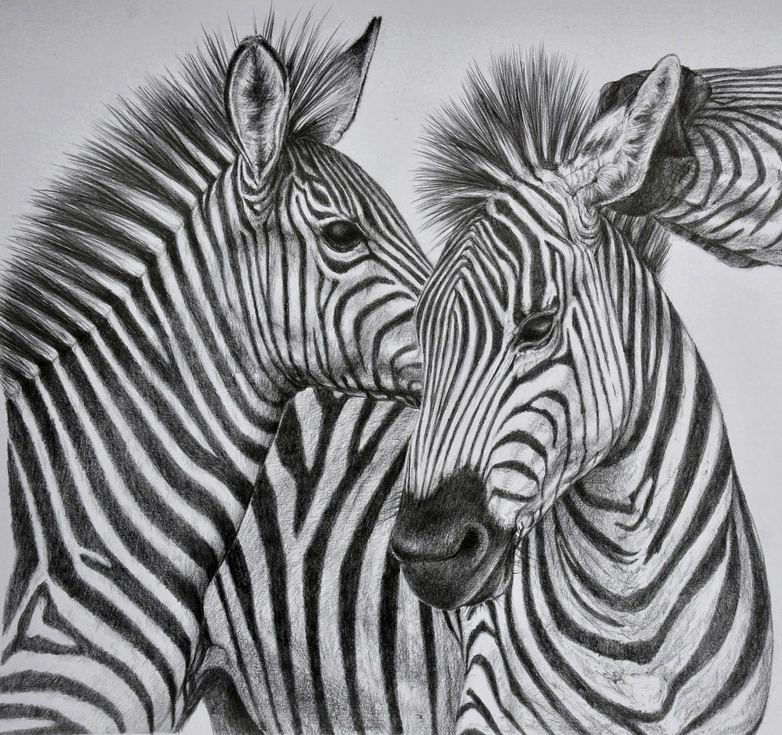 40 Beautiful and Realistic Animal Sketches For Your