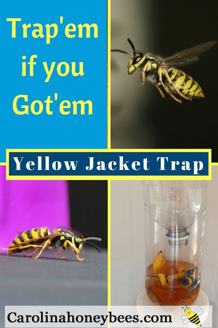 Bee trap: do it yourself 19