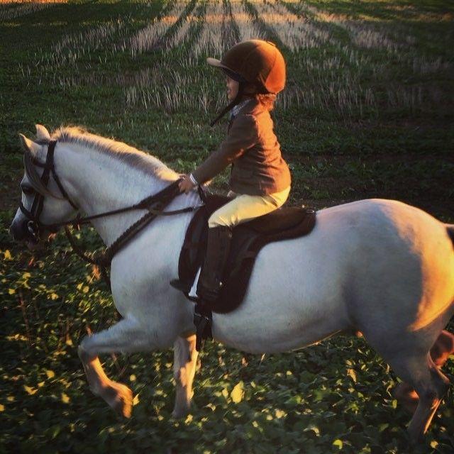 e28442937 Kizzy  amp  Etties Pony Adventures ( kizzy and etties ponies) • Instagram  photos and videos Kizzy