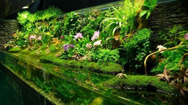 German Open Style Aquascape Aquatic Plants Hardscape