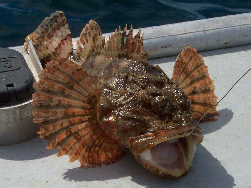 Sculpins....Suck the fun right out of fishing... | my ...