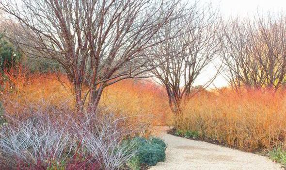 Alan Titchmarsh on why you should be planting Midwinter Fire – Plants for Winter Garden