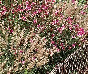Planter Tardivement Pour Un Jardin D Ete Fleuri Massif Fleurs