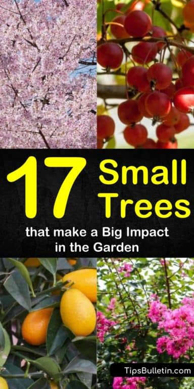 17 Small Trees That Make A Big Impact In The Garden Small Trees Drought Tolerant Trees Trees For Front Yard