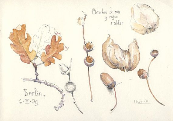 Autumn Still Life 5 Original Watercolor And Pencil Drawing Autumn
