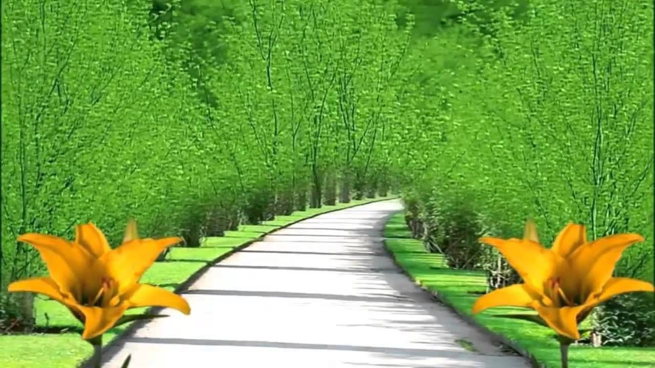 Nature HD Background 1280x720 - YouTube in 2019  Nature hd