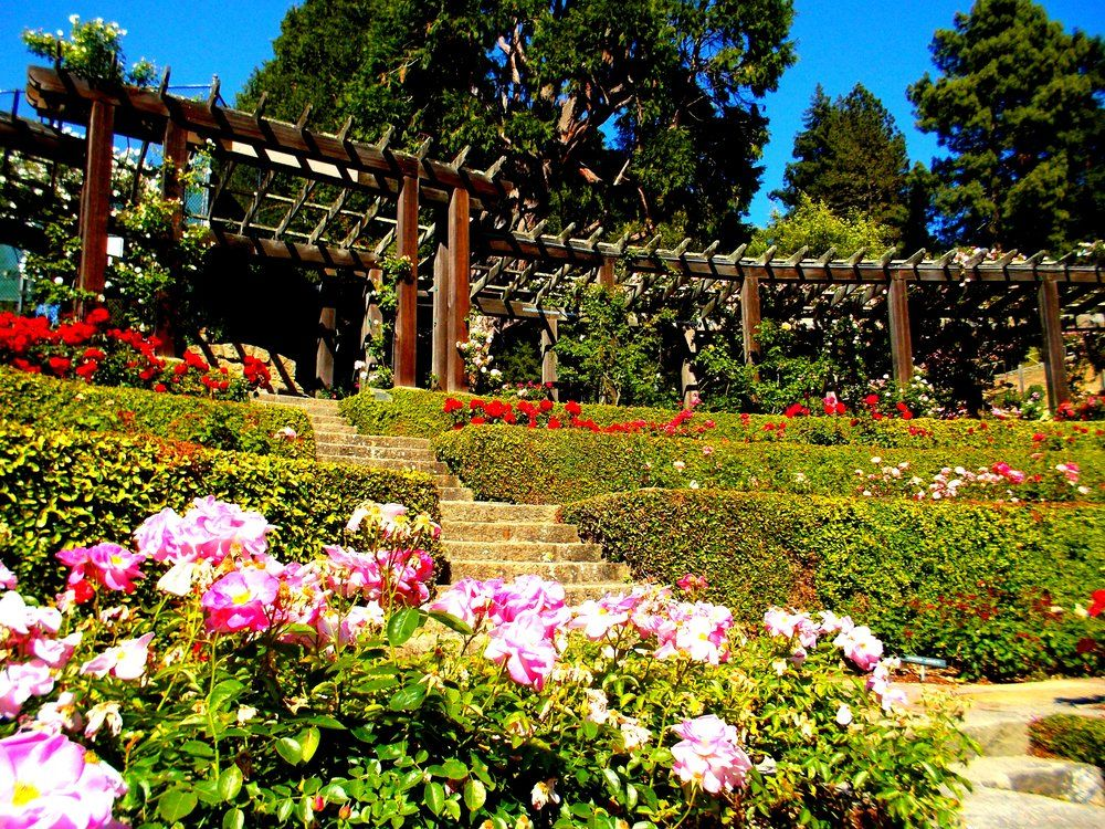 the berkeley rose garden berkeley ca united states - Berkeley Rose Garden