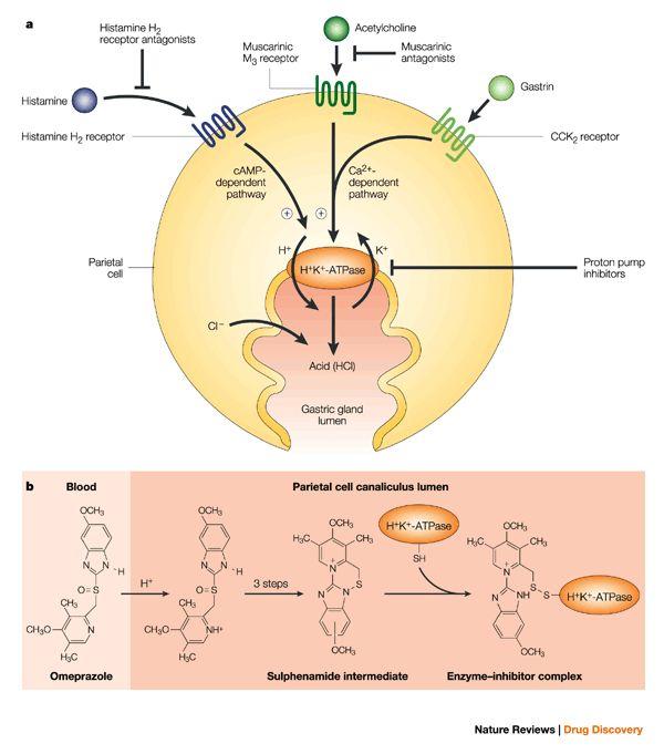 Pin On Immunology