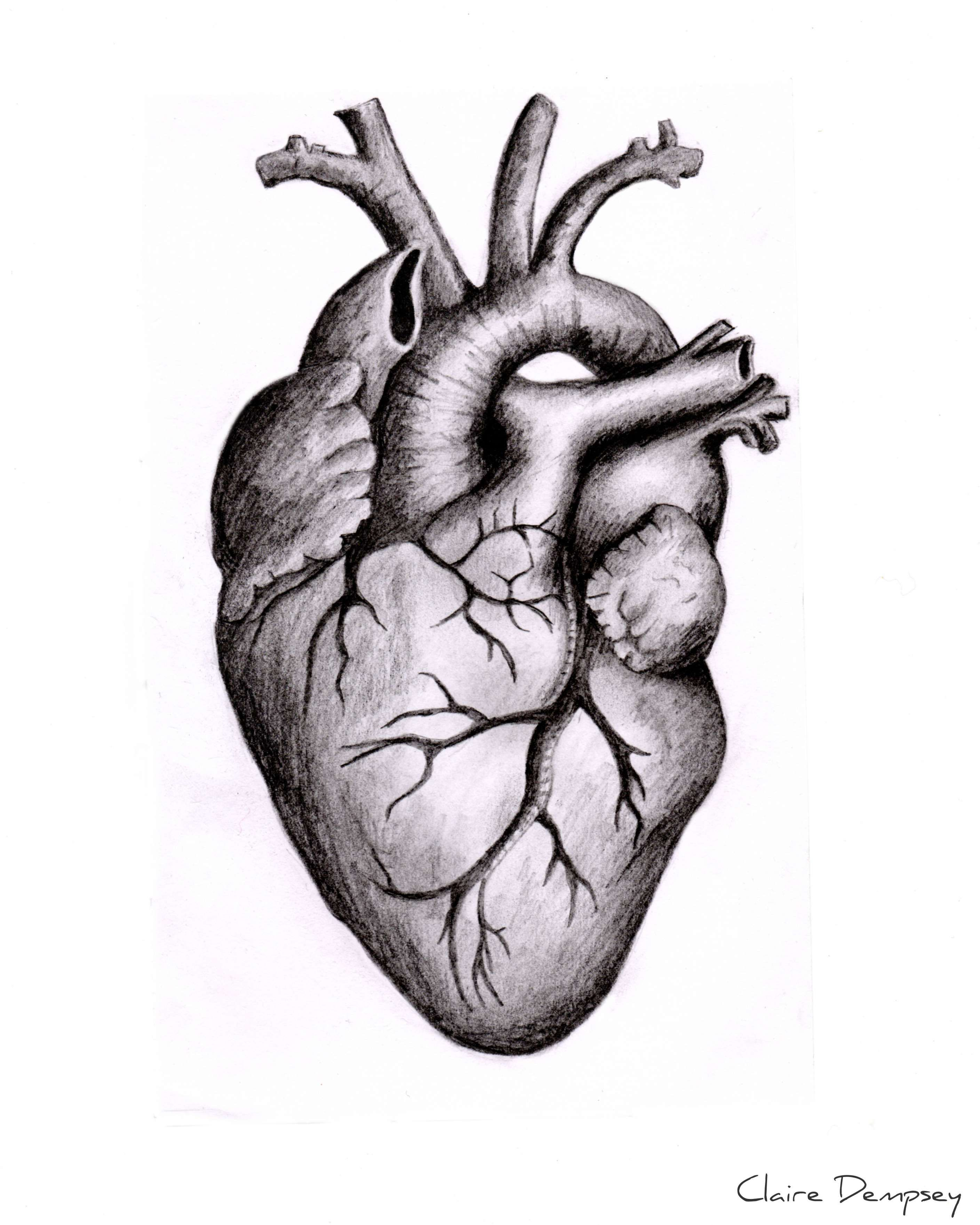 12 Drawings Of The Human Heart Anatomical Heart Drawing Heart Anatomy Tattoo Human Heart Drawing