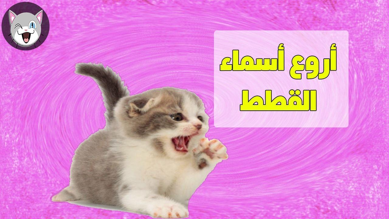 اسماء قطط جميلة للذكور و للإناث و تحفظها القطط بسرعة Cat Names Cats Sports