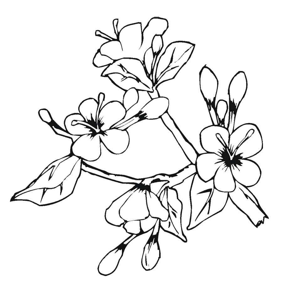 20+ Cherry blossom coloring sheets ideas in 2021
