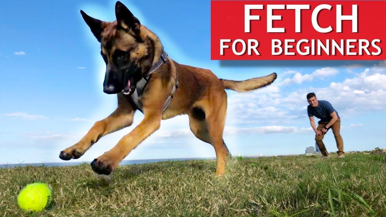 Train Any Dog How To Play Fetch Perfectly Youtube Training Your Dog Dog Training Play Fetch