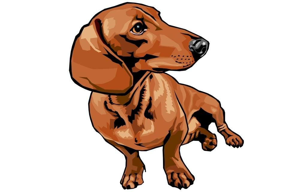 Dachshund Drawing Cartoon Tattoo Share Thai Chi Tableau